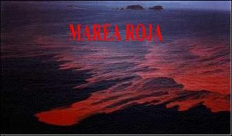 20060804205113-marea-roja-60-80.jpg