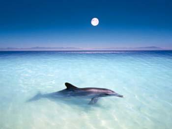 20061122221215-dolphin.jpg