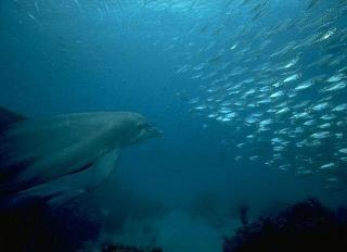 20070828194832-delfines67-5050.jpg