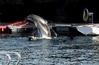 20080814231503-delfin-gaspar.jpg