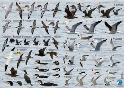 20141031230745-aves-marinas.jpg