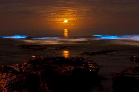 20141129231711-bioluminiscencia-luna2.jpg