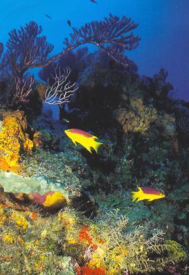 20061012014138-20061007021753-arrecife-cancun.jpg