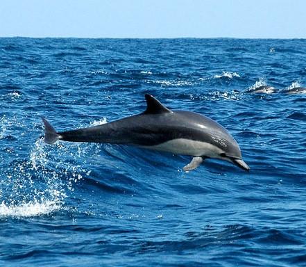 20120904061501-delfin-comun-bygarry-mccarthy.jpg