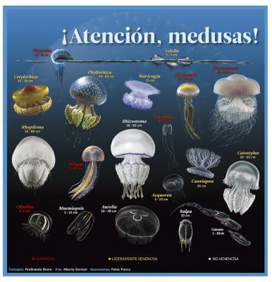 20160131214706-medusas-muyinteresante.jpg