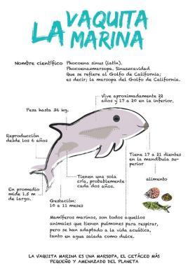 20190201044723-vaquita-marina.jpg